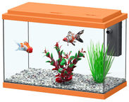 Aquatlantis Funny Fish 35 Orange