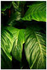 Home4you Print Picture Nature 40x60cm Palm Leaves 2