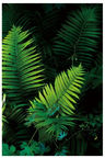 Home4you Print Picture Nature 40x60cm Palm Leaves 1